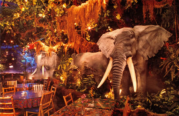 Www Rainforestcafe Com